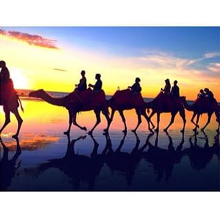 AT LIGHTHOUSE BEACH  $35 pp  Camel rides,