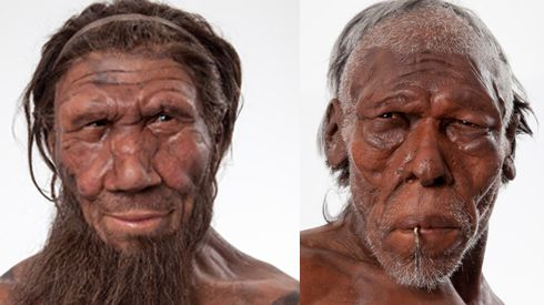 neanderthal and the relationship to modern According to a new dna study, most humans have a little neanderthal in them—at least 1 to 4 percent of a person's genetic makeup the study uncovered the first solid genetic evidence that.