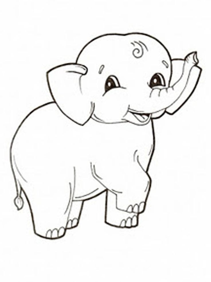 Best 25 Animal pictures for kids