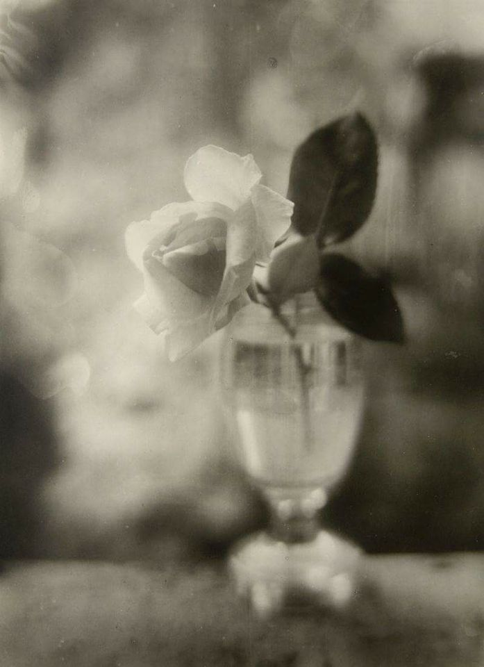 By Josef Sudek. (Rose in a Glass - 1950).✖️More Pins Like This One At FOSTERGINGER @ Pinterest✖️