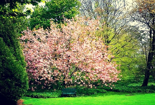 802 best flowers gardens trees in europe images on for Garden trees scotland