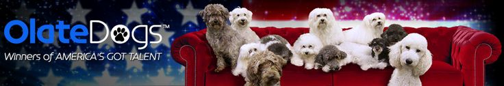 Olate Dogs was a dog group act from Season 7 of America's Got Talent. It was the winner of the competition, winning $1,000,000 and the headlining… http://agt.wikia.com/wiki/Olate_Dogs