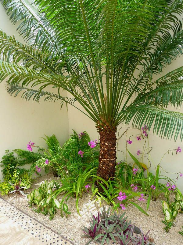 jardín tropical orquideas de tierra y helechos