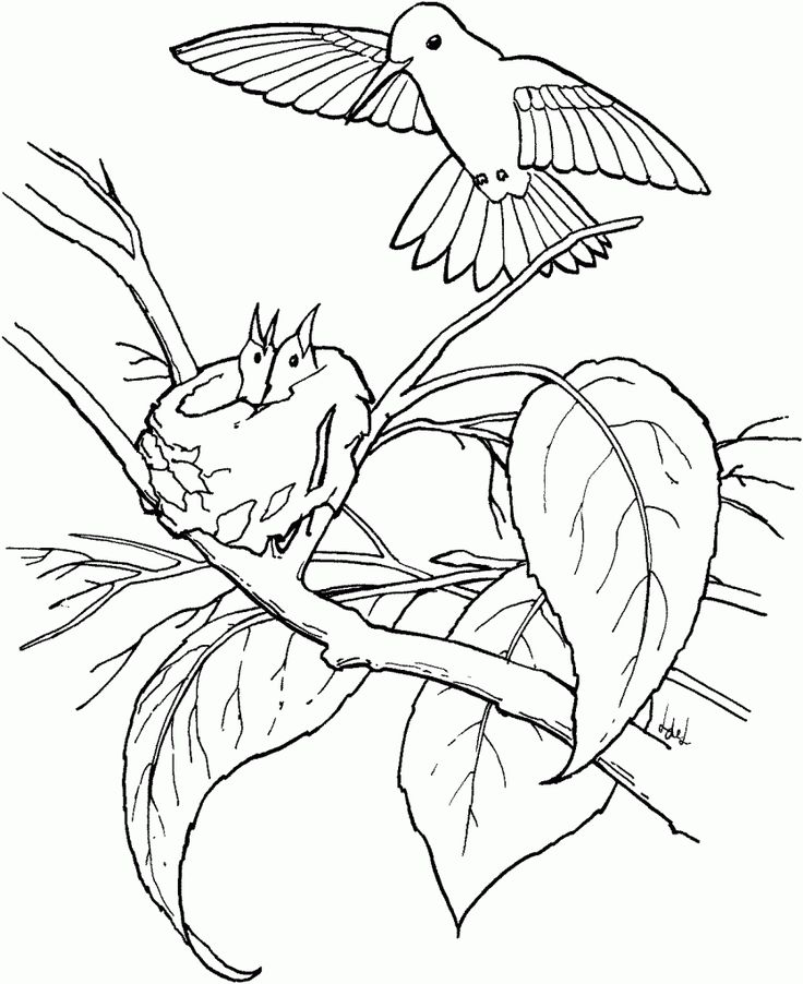 find this pin and more on hummers hummingbird coloring pages
