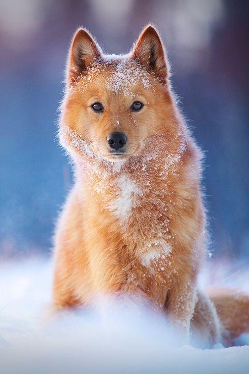 My dog - Mattias Holter https://500px.com/photo/14880037/my-dog-by-mattias-holter
