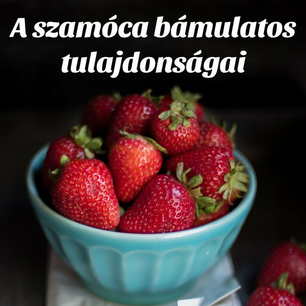 A földiepret, azaz a szamócát a gyümölcsök királynőjének hívják egyes ázsiai országokban a számos egészségre gyakorolt hatása miatt..