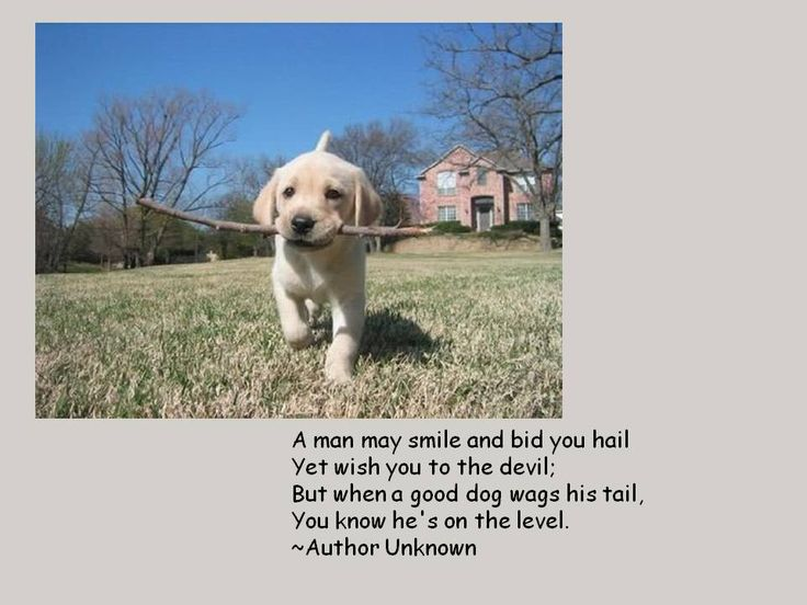 Quotes for #dog lovers!!