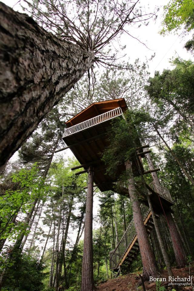 Les 25 meilleures id es concernant maisons dans les arbres sur pinterest maison pour enfants - Comment se debarrasser des fourmis sur les arbres fruitiers ...