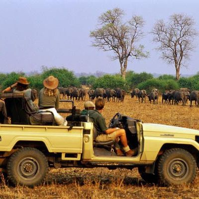 http://goafrica.about.com/od/africanwildlife/ss/The-Big-5-Images-Facts-And-Information-About-Africas-Big-Five.htm