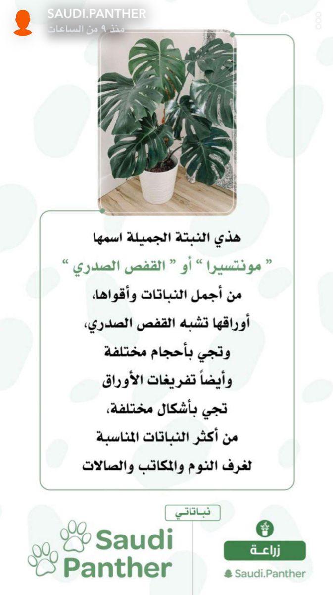 نبتة مونتسيرا Container Herb Garden Flower Care Trees To Plant