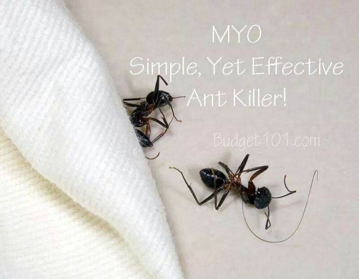 Ant killer