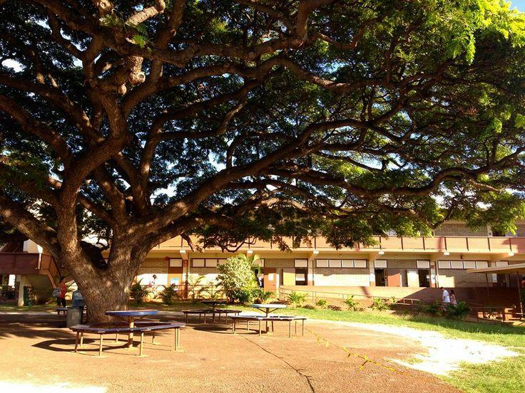 「レインボー学園」 このハワイらしいかわいい名前、毎週土曜日だけ子供たちが通う、幼稚園から中学校までの日本語補修校の名前です。 中庭に大きな木がある緑豊かな校舎は、カイムキという地域にある中学校の校舎。 土曜日だけ校舎を借りて、ハワイの子供たち500人弱が通っています。(2012年現在) 科目は国語と算数のみ。日本のカリキュラムに沿って、授業が行われていますが、単純に言うと、日本で5日間かけてやることを週1回でカバーすることになるので、宿題も結構多いです。 平日現地校に通いながらの勉強は、かなり、いや、すんごい大変! それでもやっぱり日本人としての教養とアイデンティティを持ち続けてほしいと願う親としては、子供と一緒に頑張る覚悟で通わせています。 日本人学校とは言え、子供同士の会話の半分以上は英語・・。やっぱり英語が楽チンになってきてしまうんでしょうねぇ。その一方で現地校では使わないランドセルを背負ってくる子供たちも結構いて、なんだか不思議な空間です。笑  ::MamaA::