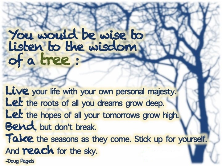 Tree Wisdom Quotes. QuotesGram