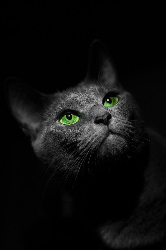 Night emeralds Gato preto dá sorte!