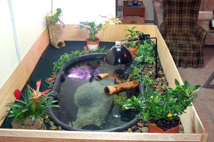 18 best images about indoor turtle pond on pinterest for Small pond setup