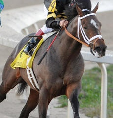"""""""Oxbow"""" - 2013 Kentucky Oaks & Derby   May 3 and 4, 2013   Tickets, Events, News #KentuckyDerby #Derby #Horses"""