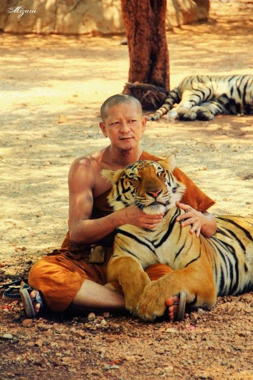 Monk and Tiger in Thailand