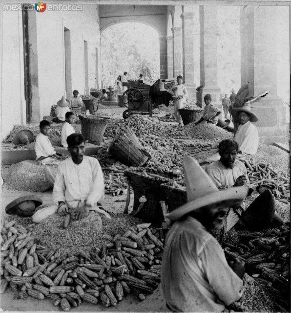 Fotos de Guadalajara, Jalisco, México: Desgranando Maiz  Hacia 1900