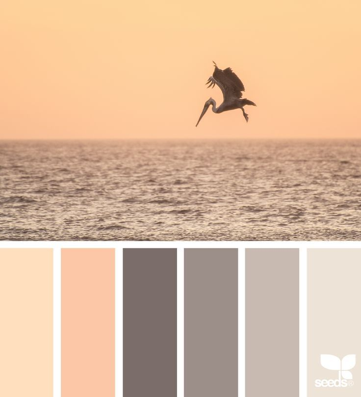 { creature color } image via: @amandarimmerphotography
