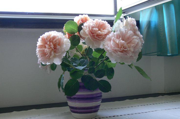 Tea Clipper in vaso
