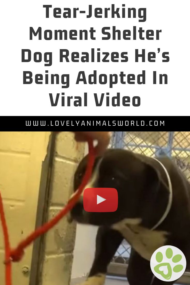 Tear-Jerking Moment Shelter Dog Realizes He's Being Adopted In Viral Video
