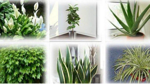 Plantas que necesitas tener en tu casa