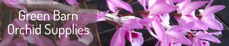 Find the latest collection of orchid potting from Green Barn Orchid Supplies .