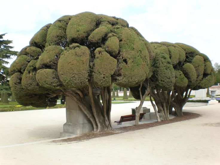 Unique Tree - looks like overgrown broccoli to me.