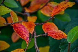 stefansphotos.se blogg: hösten den blåser vidare! och solen skiner och mer...