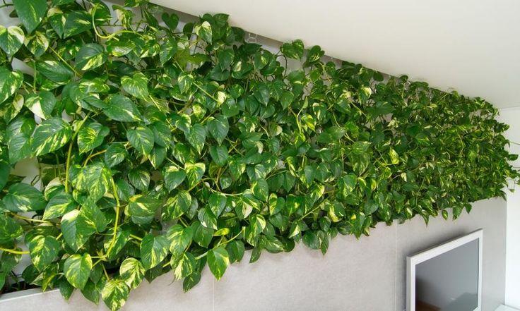 grüne Detail kleine slowakischen Wohnung verbessert mit LED Beleuchtung von vorgestellt Rudolf Lesňák