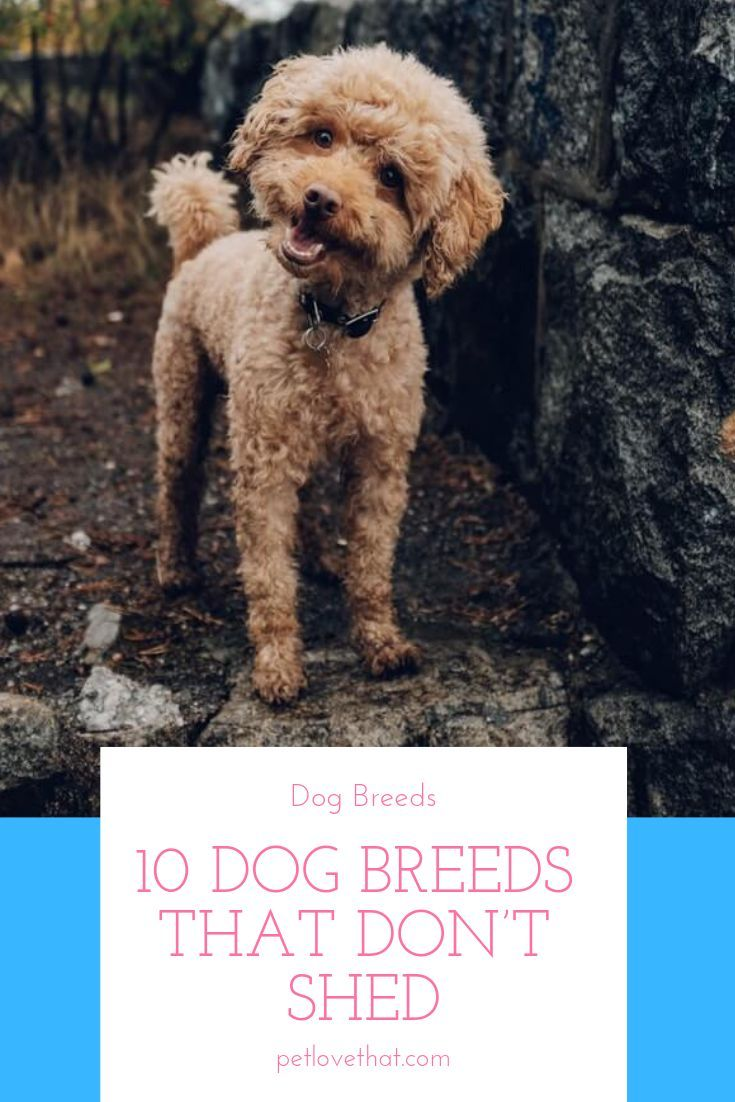 There Is A Reason That The Dog Is Referred To As Man S Best Friend They Are Lovely Pets That Turn Any Dog Breeds That Dont Shed No Shed Dog Breeds