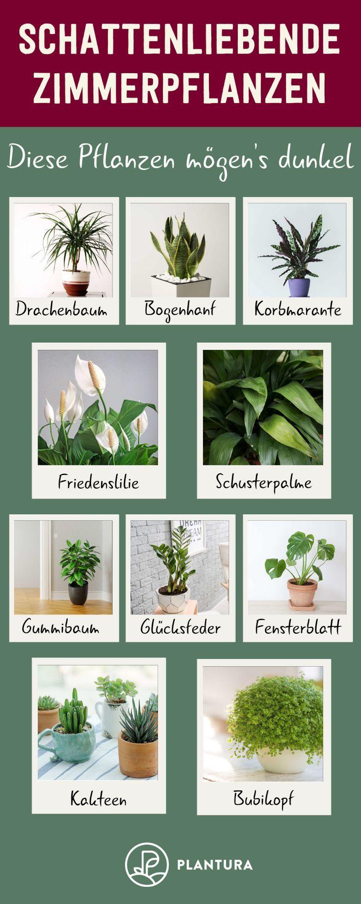 Schattenliebende Zimmerpflanzen – Diese Pflanzen mögen's dunkel: Wir zeigen Euc