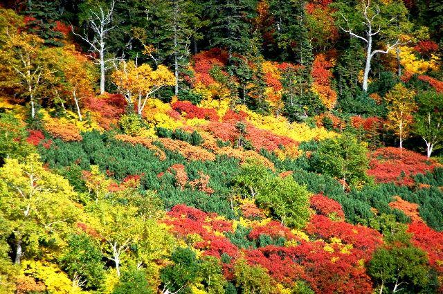 紅葉 北海道大雪山