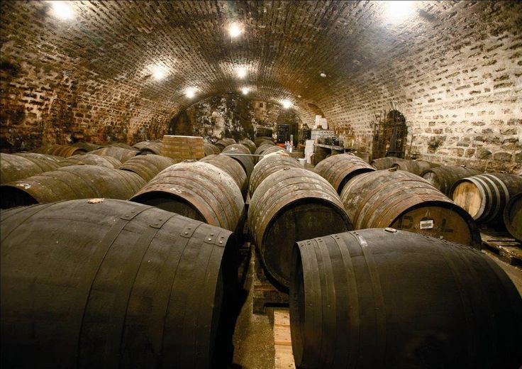 underground cellars in Bouze-les-Beaune, Burgundy - France