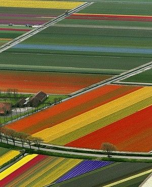 aerial views of tulip farms in Amsterdam  http://www.bonexpose.com/2011/07/aerial-photography-2/