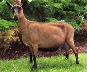 Козы (Goats, 2012) рекомендации