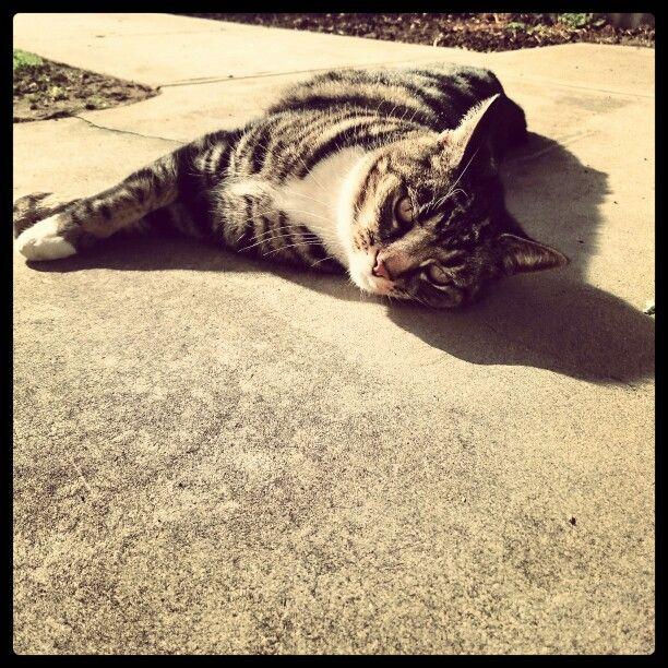 Thomas the cat loving the winter sun.
