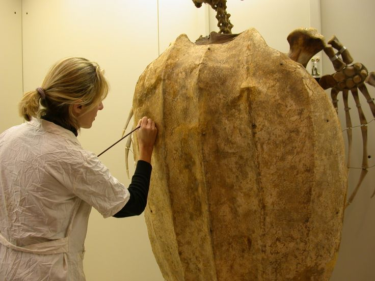 tartaruga liuto restauro modello e pittorico
