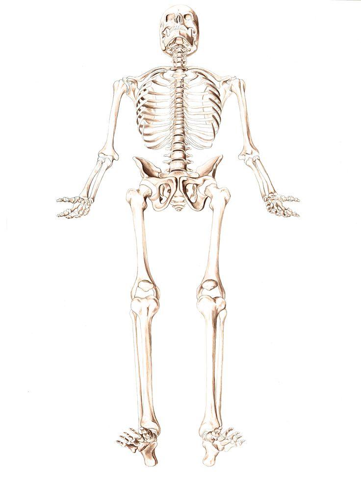 39 best Gesundheit images on Pinterest | Anatomie, Physiotherapie ...