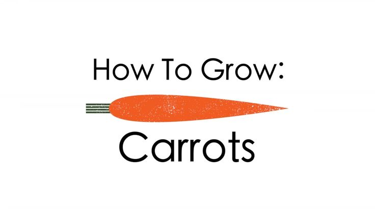 how to grow carrots hydroponically