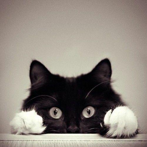 soft #kitty, warm kitty, little ball of fur