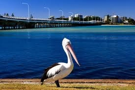 Forster-Tuncurry Australia - spent a beautiful week there!