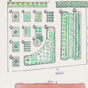 Plant din egen kjøkkenhage
