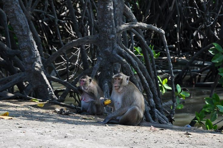 Monkey love to eat also