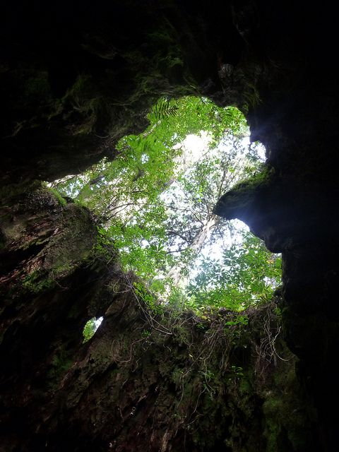 Heart shape at Wilson's Stump in Yakushima Kagoshima ,Japan
