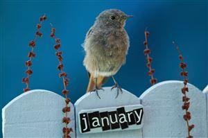 Januar-Highlights - emotion.de