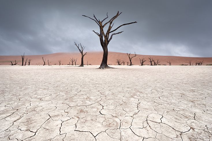 """Marsel van Oosten - Deadvlei is a white clay pan located near the more famous salt pan of Sossusvlei, inside the Namib-Naukluft Park in Namibia. Also written DeadVlei or Dead Vlei, its name means """"dead marsh"""""""