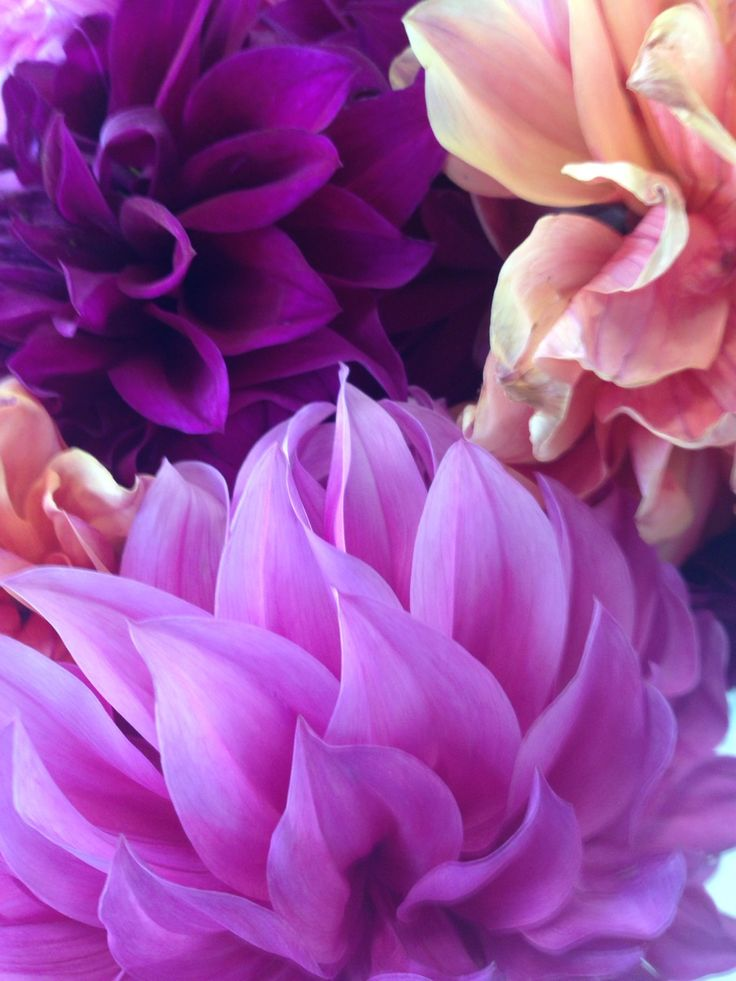 PANTONE Color of the Year 2014   Radiant Orchid decor