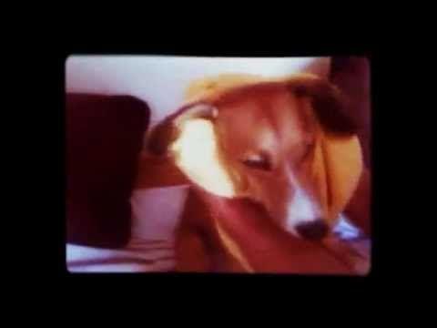 Marsa enjoys much more the time after bath... watch!  Τα ΣκυλοΝέα Της Μάρσας » Η απόλαυση μετά το μπάνιο σε slow motion… (video)