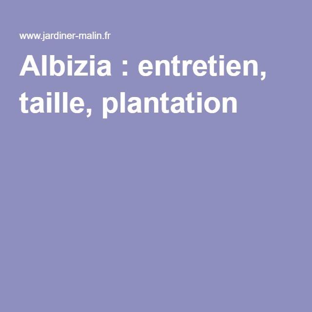 Albizia : entretien, taille, plantation